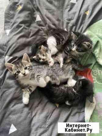 Умные коты (мальчики) в хорошие руки Псков