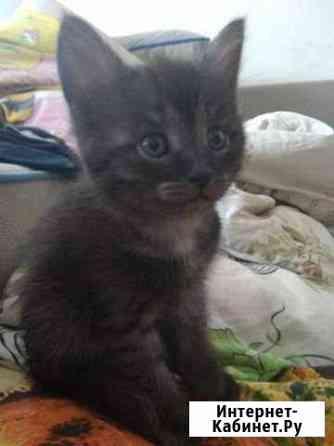 Котёнок 1,5 мес Стерлитамак