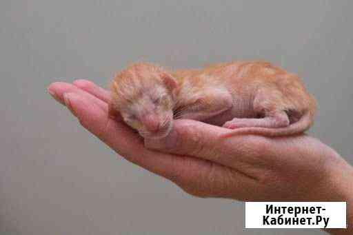 Бронь котят Курск
