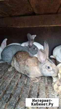 Кролик Асекеево