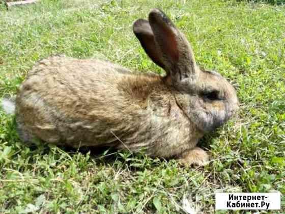 Кролики Уварово
