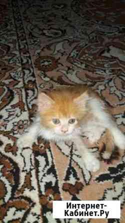 Кошка Ставрополь