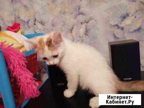 Отдам в добрые руки котенка Стерлитамак