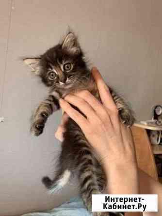 Котёнок ищет заботливую и любящую семью Москва