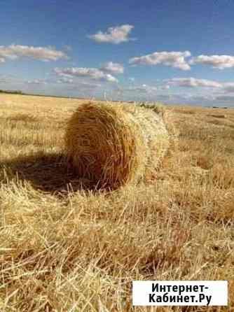 Солома пшеничная Россошь