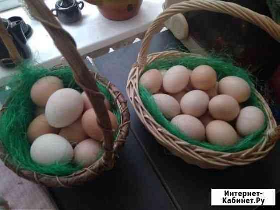 Инкубационное яйцо Калининград