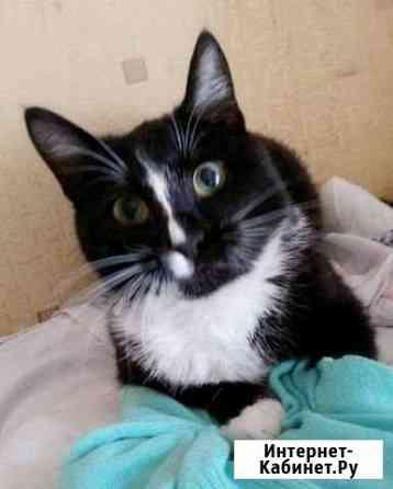 Кот ищет дом Ярославль