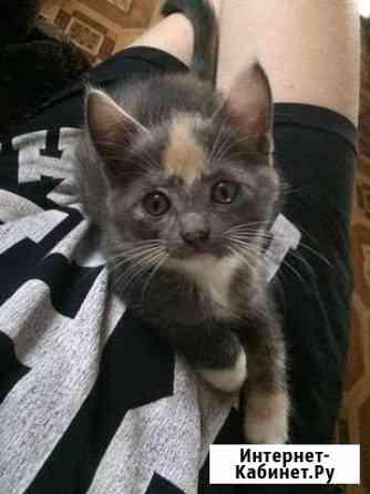 Котёнок Чебоксары