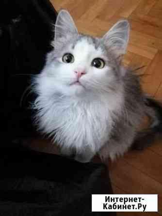 Котёнок Винни-Пух Оренбург
