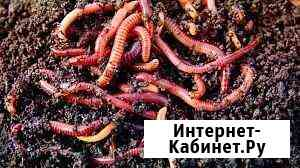 Калифорнийский червь Нижний Новгород