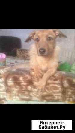 Собака Рефтинский