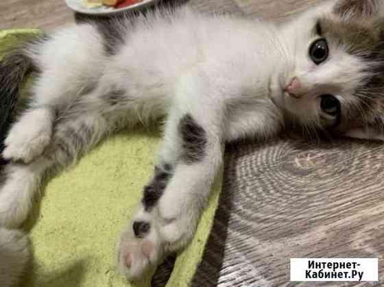 Котёнок мальчик Энгельс