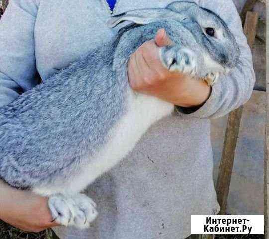 Продам крола Сарапул