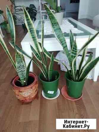 Растения Санкт-Петербург