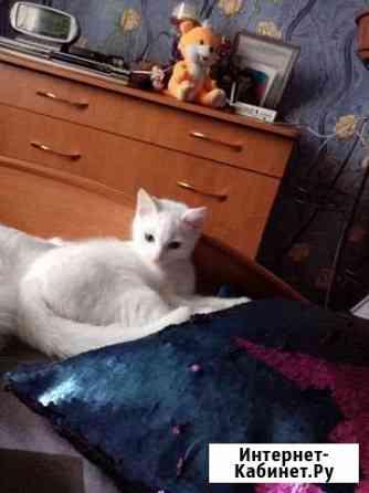 Отдам котенка в очень добрые руки Кемерово