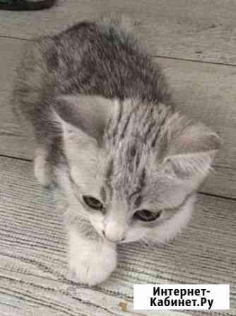 Котята Мысхако