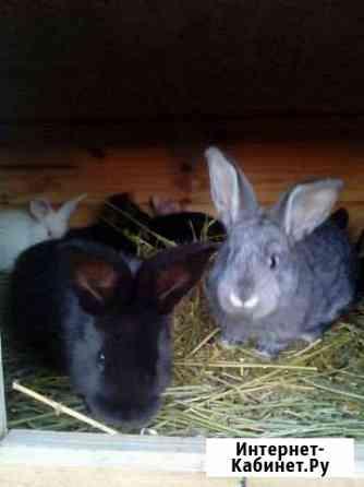 Кролики Большая Елховка