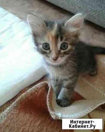 Котенок в Добрые руки Астрахань