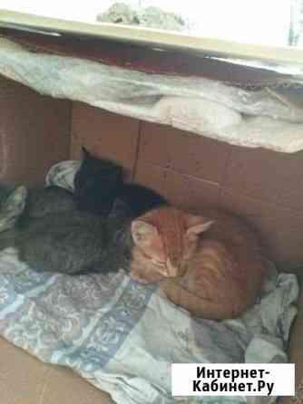 Котята бездомные Майкоп