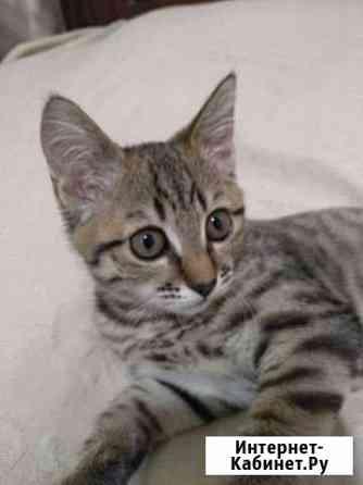 Кошка Миасс
