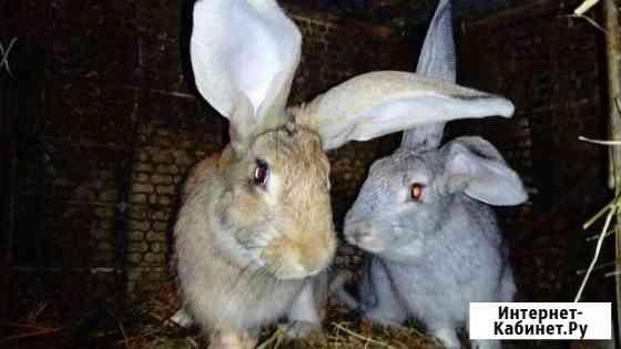Кролики Сатка