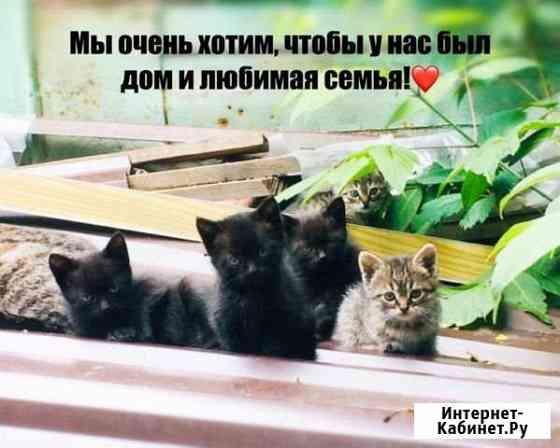 Отдам в добрые руки котят) Новочеркасск