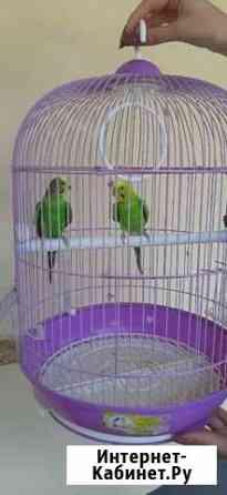 Птицы Прохладный