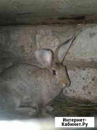 Кролики Красный Яр