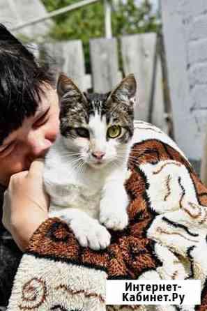 Котик ищет дом Йошкар-Ола