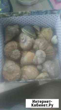 Ракушки морские Осиново