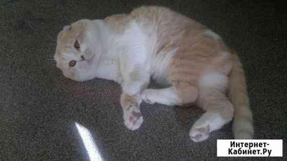 Кот на вязку Барнаул