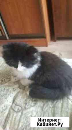 Котенок в добрые руки Смоленск