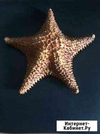 Морская звезда Санкт-Петербург