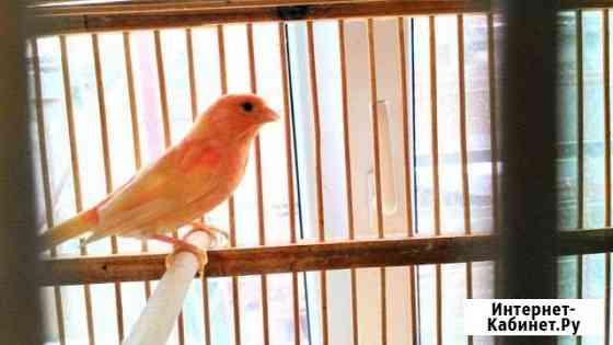 Птицы Таганрог