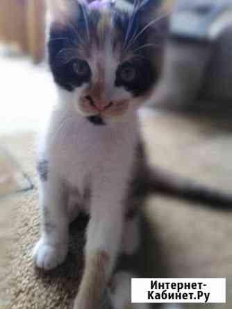 Устые котята-дьяволята Таганрог