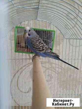 Попугай с клеткой Тольятти