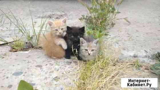 Котята в добрые руки Анапа