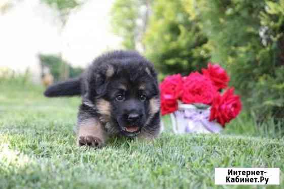 Собака Москва
