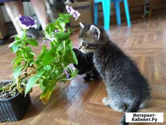 Котята в добрые руки Брянск