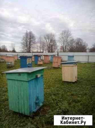 Пчёлы, отводки, семьи Псков