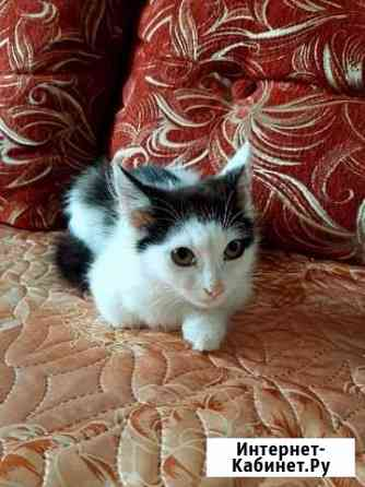 Котята ищут дом Киров