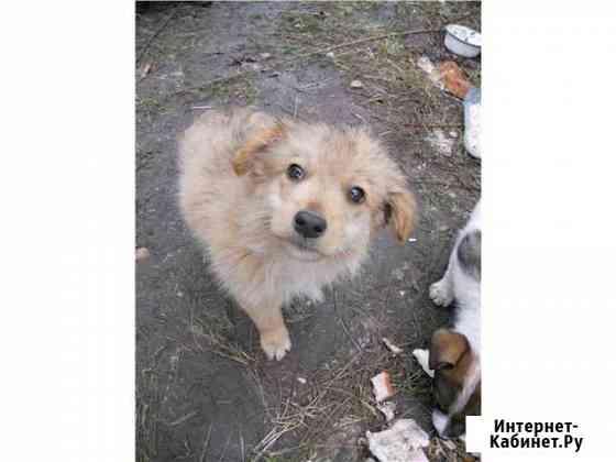 Возьму собачку любой породы Киселевск