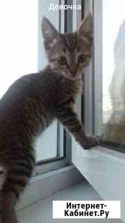 Котята ищут семью Чистополь