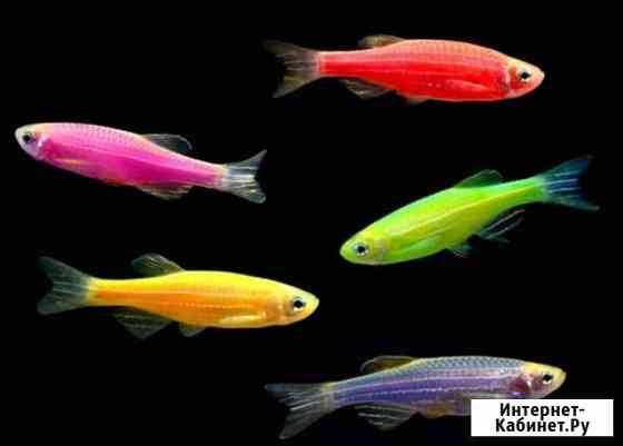 Рыбки, аквариумы, растения, корма, оборудование Чехов