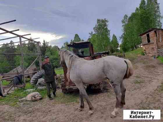 Лошадь.Жеребец 4 года Усолье-Сибирское