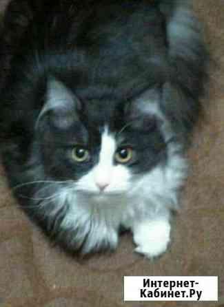 Сибирская кошка Уфа