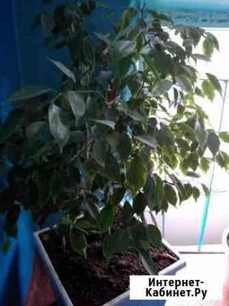 Декоративные растения Астрахань