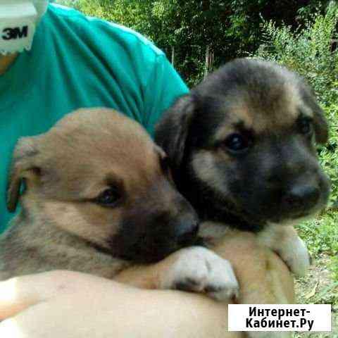 Собака Барнаул