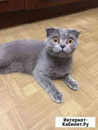Кошки Тольятти