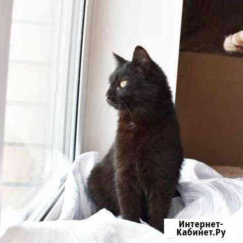 Котенок мальчик 3,6 мес Оренбург